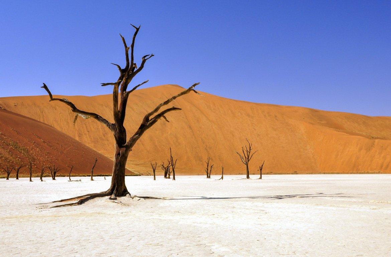 Árvores mortas, Dunas de Sossuvlei, Namíbia