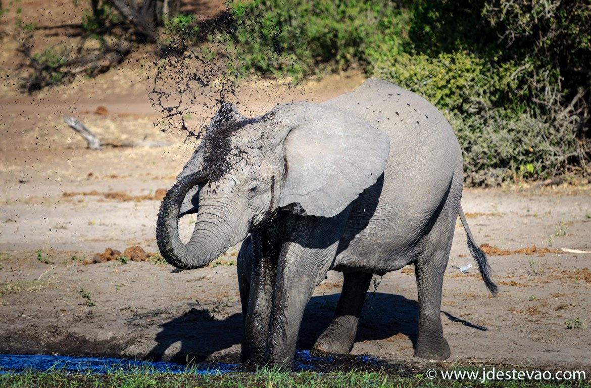 elefante Parque Nacional Hwange