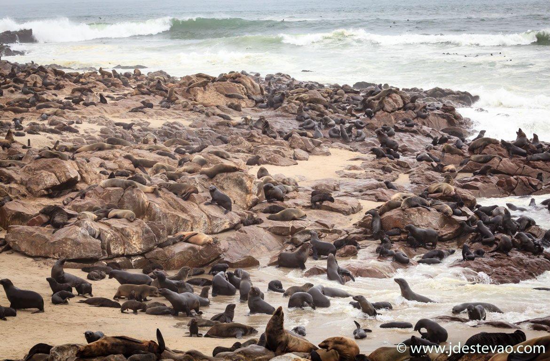 Focas no Cabo da Cruz, na Namíbia.
