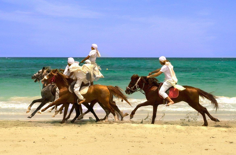 Cavalos na praia em Djerba, Tunísia