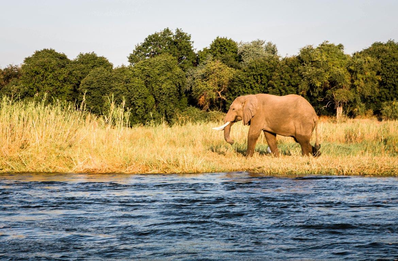 Elefante no Parque Nacional de Mana Pools, Zimbabué