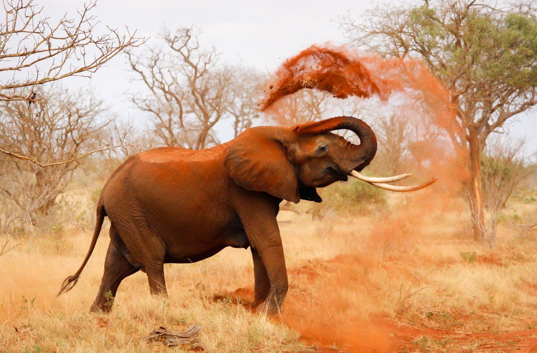 Elefantes no Parque Nacional Tsavo, Quénia
