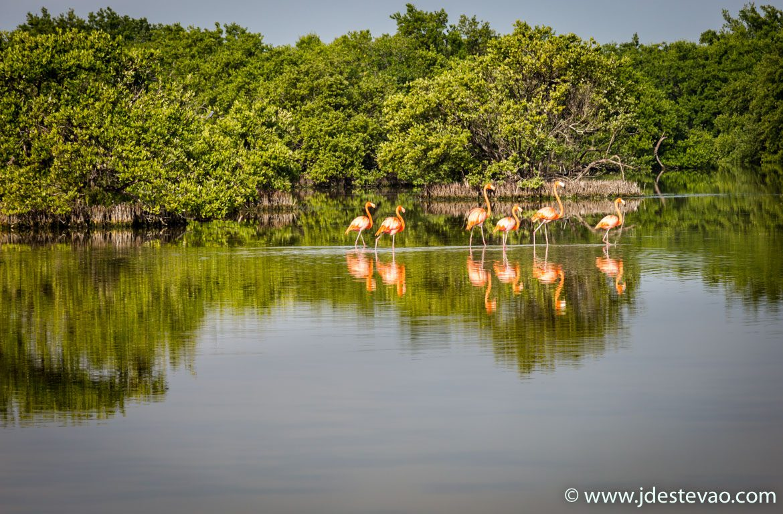 Flamingos na reserva da Biosfera Ciénaga de Zapata, Matanzas, Cuba