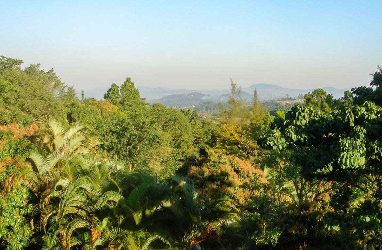 Floresta de Jarabacoa, República Dominicana.