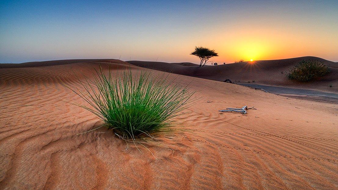 Nascer do sol no deserto do Kalahari, Botswana.
