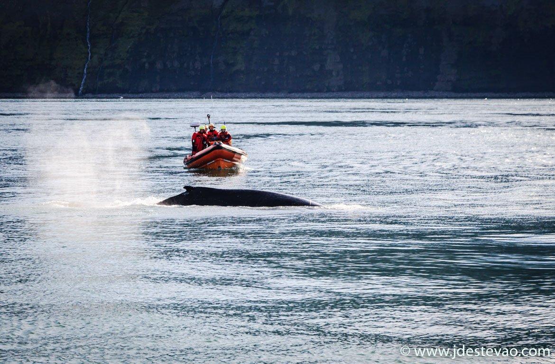 Observação de baleias em Husavik, na Islândia,