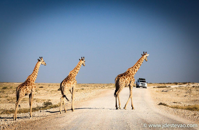 Safari no Etosha