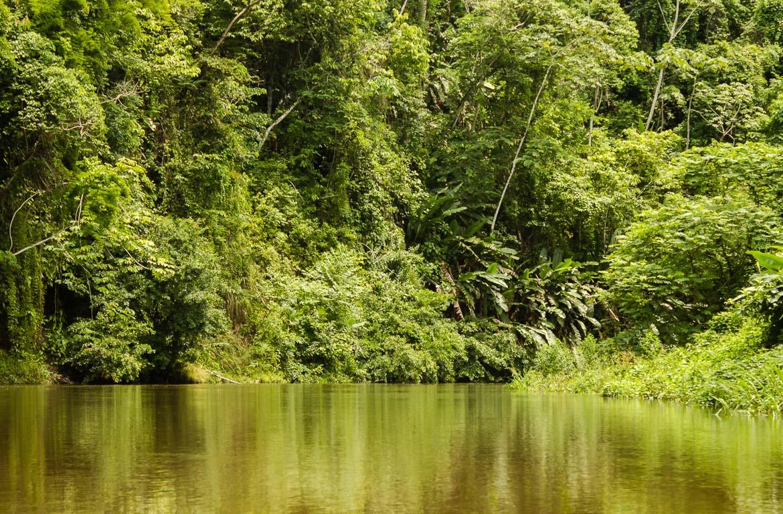 Floresta no parque Nacional Darién, Panamá.