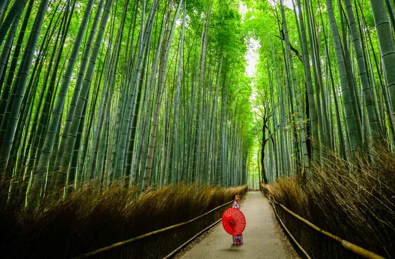arashiyama-floresta-bambu-quioto-japao-walter-mario-stein-1170-768
