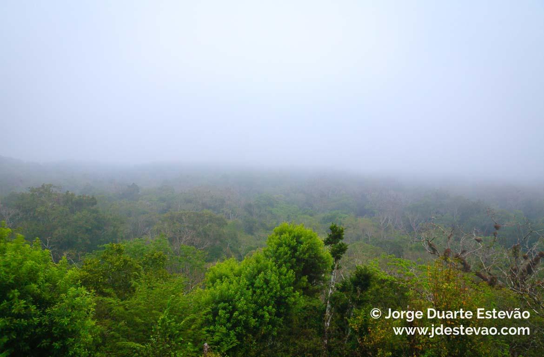 Ruínas Maia de Tikal, Petén Guatemala