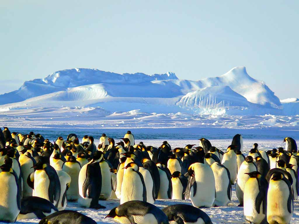 vida selvagem antártida pinguins-antartida