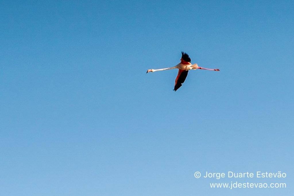 flamingos Ria formosa