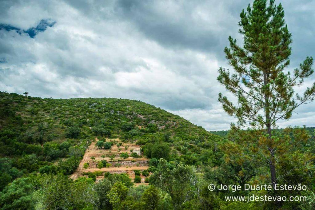Mancha de desflorestação na Fonte Benémola, Querença, Loulé