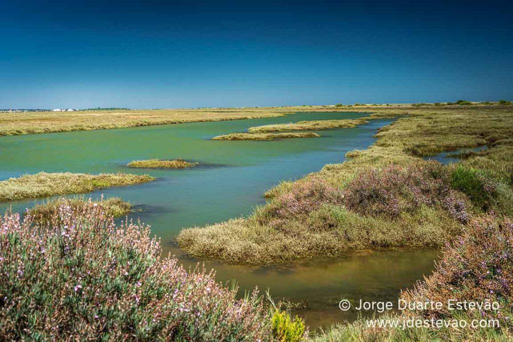 Ria Formosa, Santa Luzia, Algarve