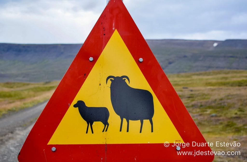 Aviso perigo de ovelhas, Islândia
