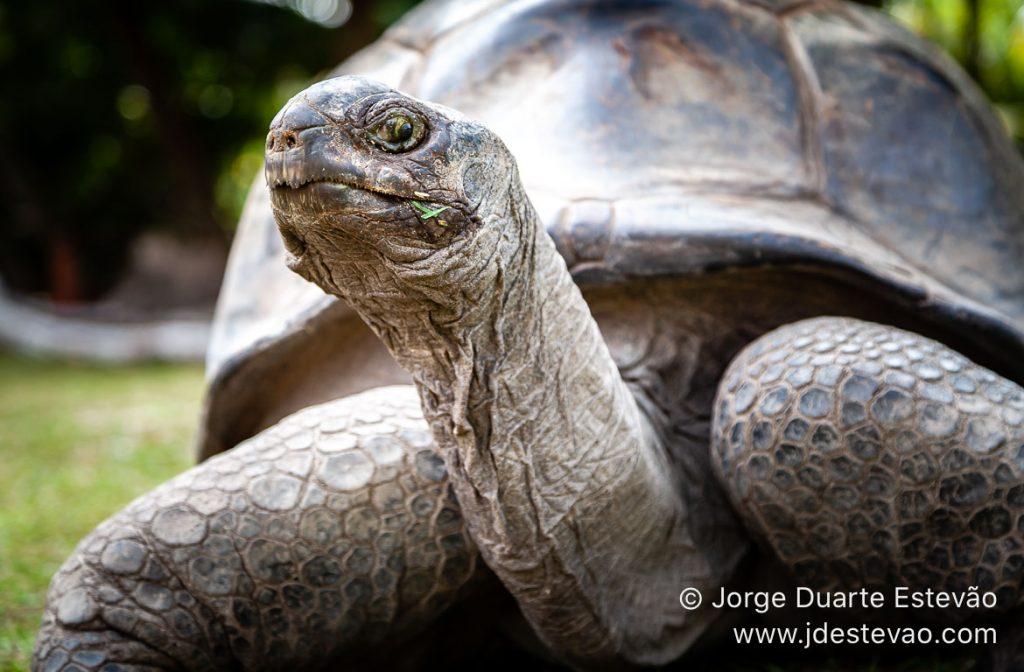 Tartarugas na lha Curieuse, Seychelles, África