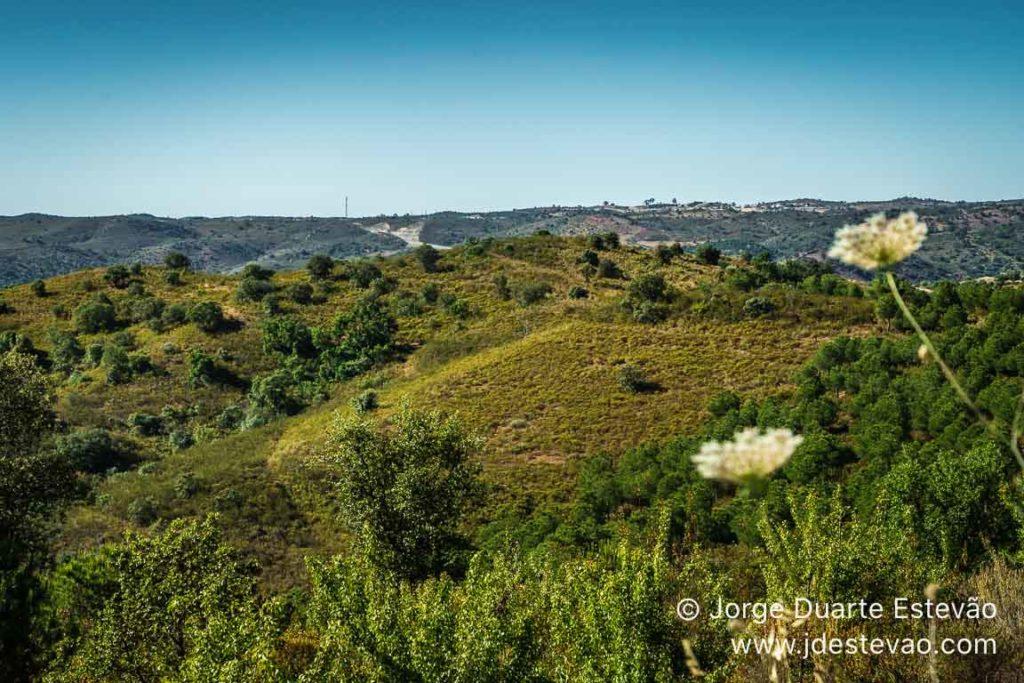 Flora da Via Algarviana