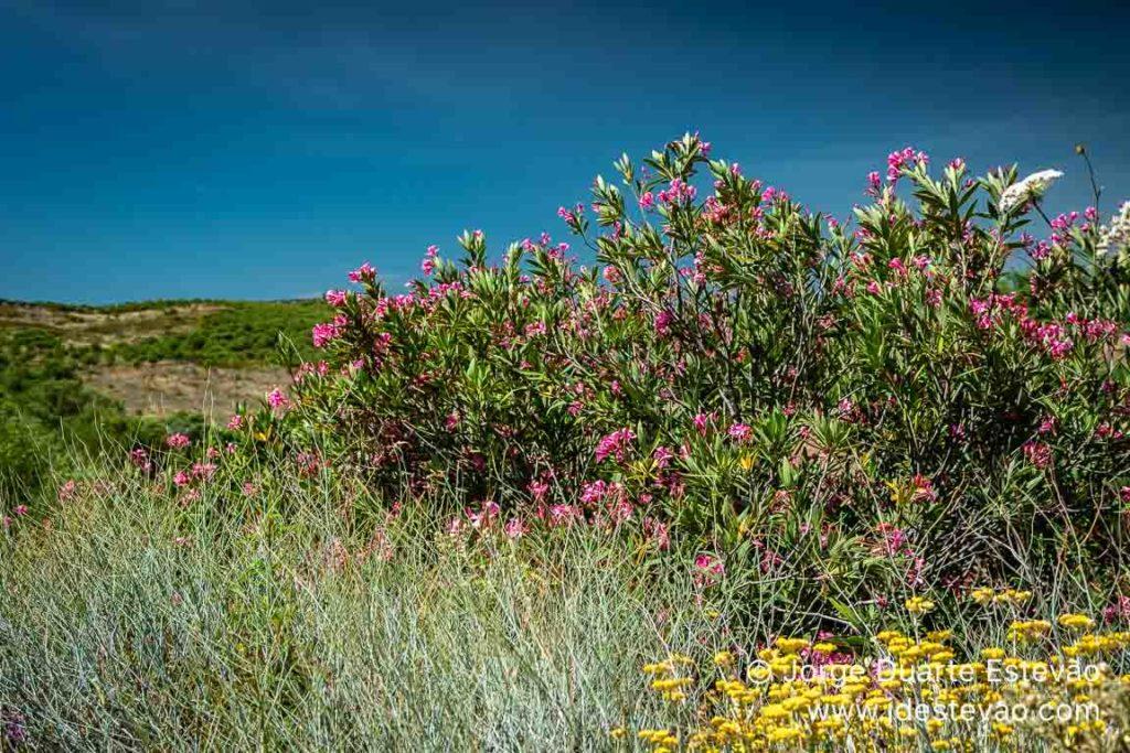Flora na Primavera em Alcoutim