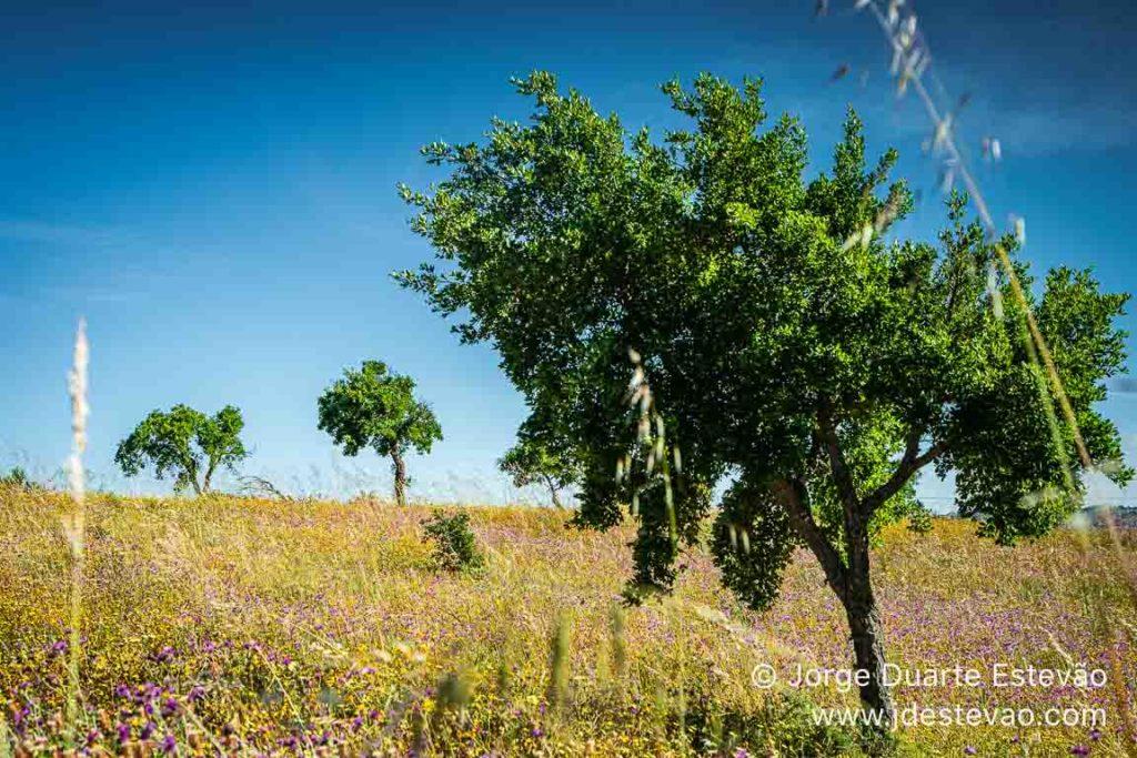 Paisagem verdejante, serra do Caldeirão